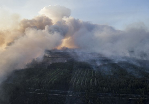 В зоне отчуждения горит лес