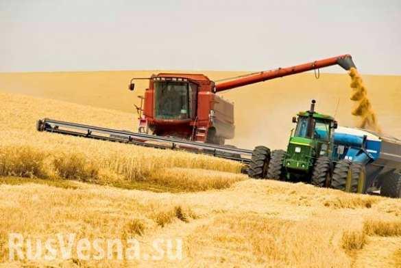 Аграрии ЛНР планируют собрать более 100 тыс. тонн ранних зерновых