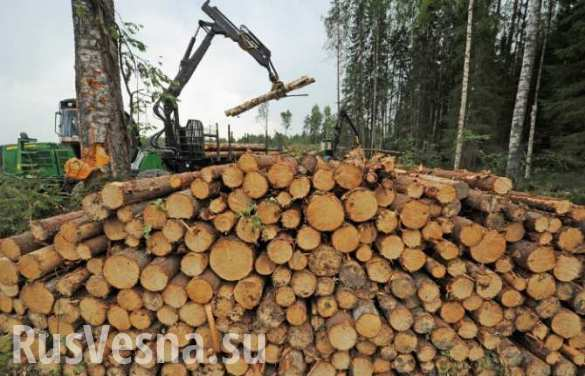 Отказ России поставлять древесину Финляндии станет серьезным ударом по финской экономике, — финские эксперты