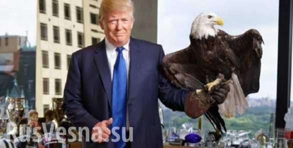 В США на Трампа напал орел (ВИДЕО)
