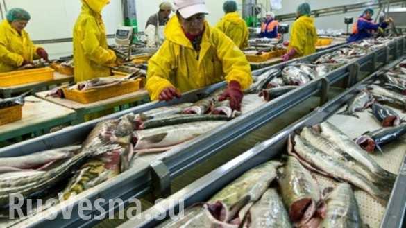 Скандально известный рыбокомбинат «Островной» объявили банкротом