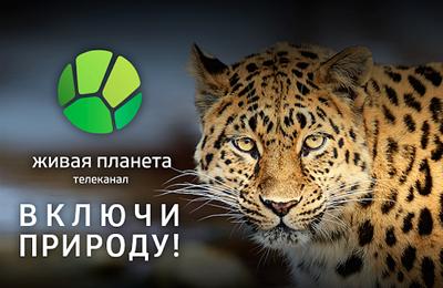 В Мариуполе СБУ борется с образовательными российскими телеканалами