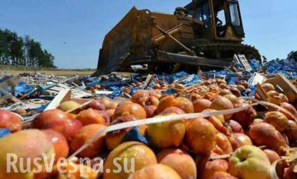 Объем контрабанды санкционных продуктов перевалил за 5 тыс. тонн